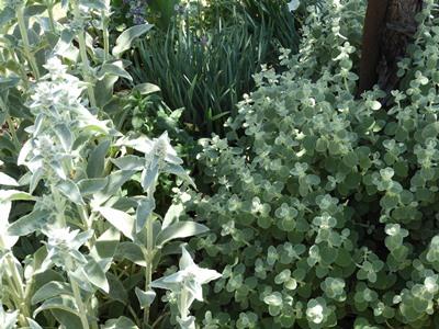 Mossbank Garden - Castlemaine