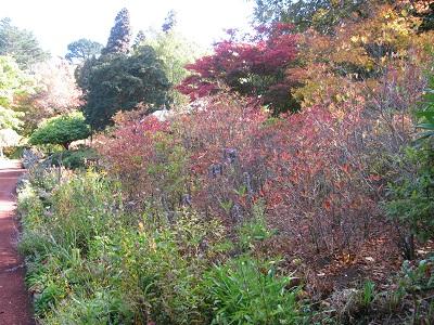 Forest Glade Gardens Mollis Azalea border