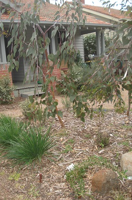Northcote Australian Native Garden Design